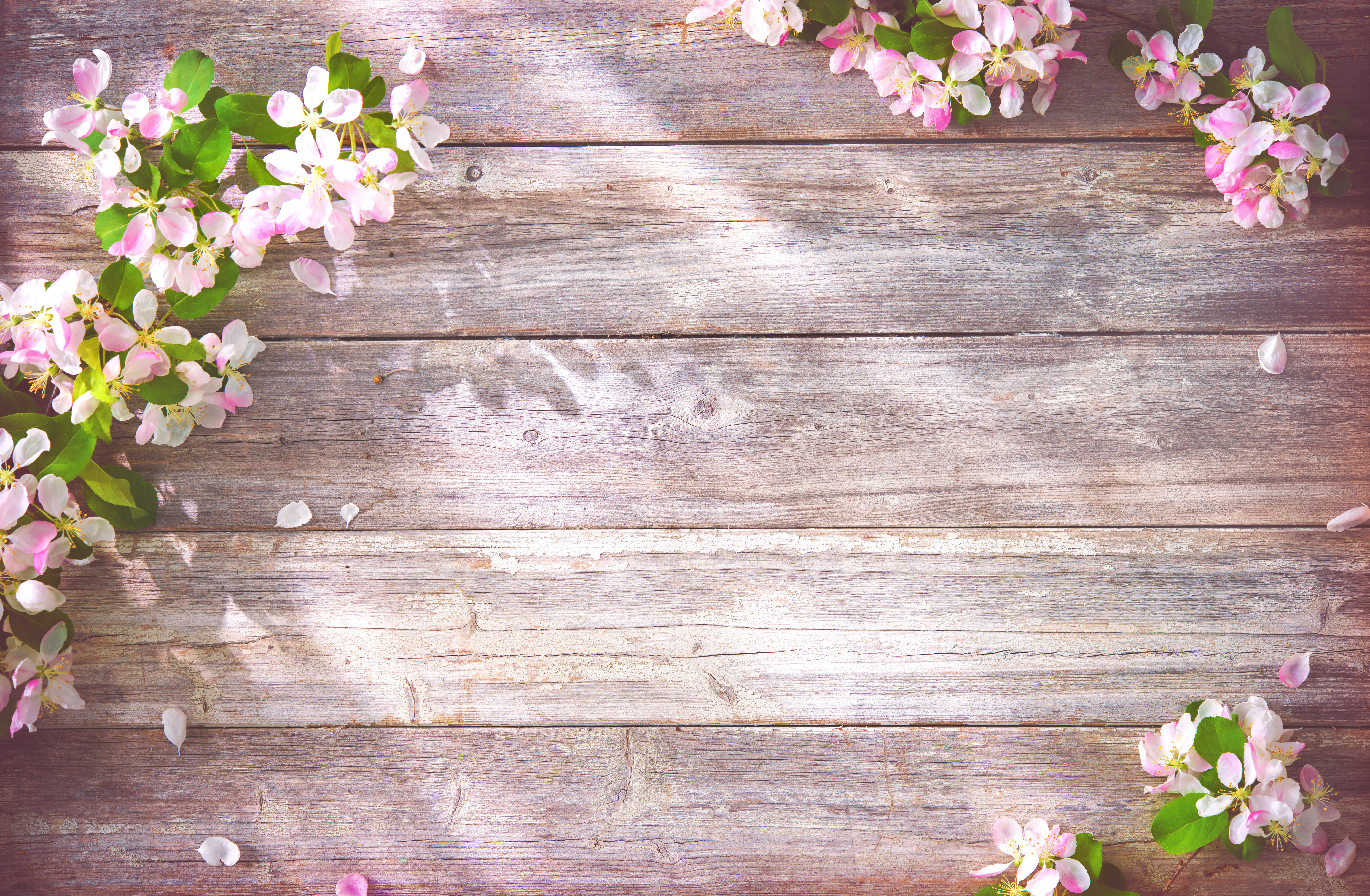 spring apple